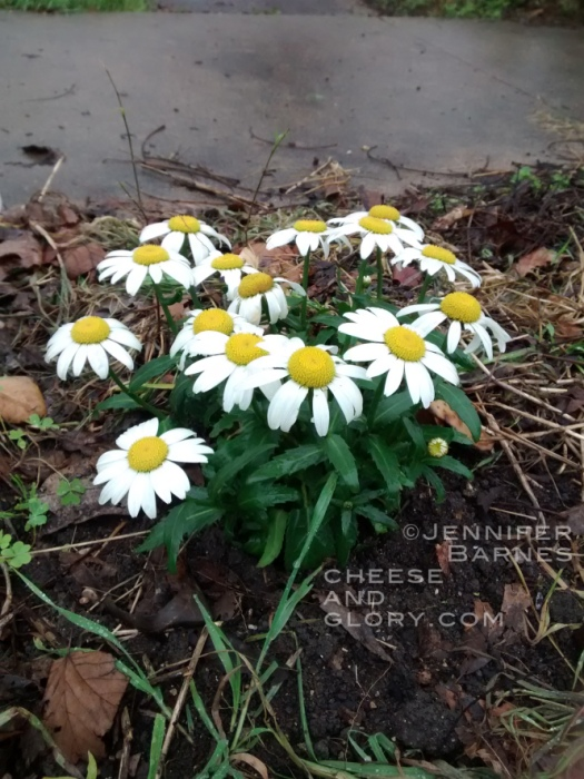 flowers032115